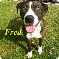 Adopt A Pet :: Fred - El Cajon, CA