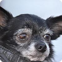 Adopt A Pet :: Albert - MINNEAPOLIS, KS