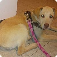 Adopt A Pet :: NALA - Coeburn, VA