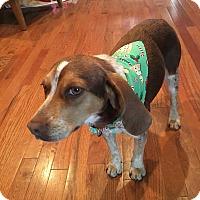 Adopt A Pet :: Starla - Staten Island, NY