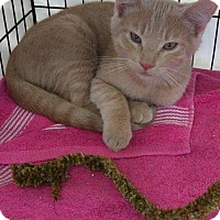 Adopt A Pet :: Yogi - San Jose, CA