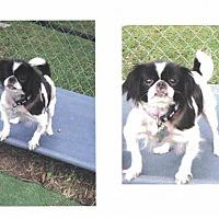 Adopt A Pet :: Laura - Cedar Rapids, IA