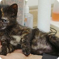 Adopt A Pet :: Lightening - Englewood, FL