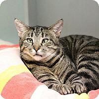 Adopt A Pet :: Ida - Los Angeles, CA