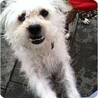 Adopt A Pet :: BOLO - Dennis, MA