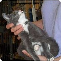 Adopt A Pet :: Hickory - McDonough, GA