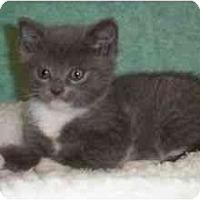 Adopt A Pet :: Dos - Reston, VA