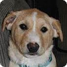 Adopt A Pet :: Super Pup Mimic