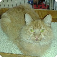 Adopt A Pet :: Ingred - Whittier, CA