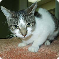 Adopt A Pet :: Lovey - Medina, OH