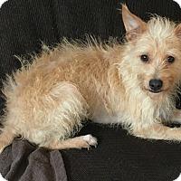 Adopt A Pet :: Jasper-Adoption Pending - Boulder, CO