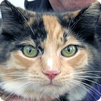 Adopt A Pet :: Flora - Germantown, MD