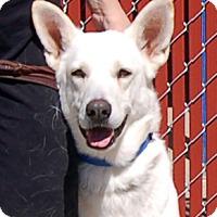 German Shepherd Dog/German Shepherd Dog Mix Dog for adoption in Phoenix, Arizona - Vienna