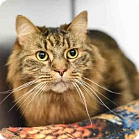 Adopt A Pet :: KING - Pittsburgh, PA