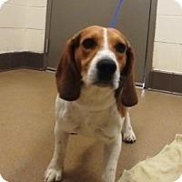 Adopt A Pet :: Max #155751 - Apple Valley, CA