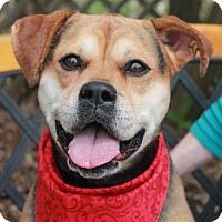 Adopt A Pet :: Mesa - Garfield Heights, OH