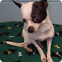 Adopt A Pet :: Brooklyn - Orlando, FL