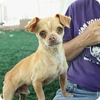 Adopt A Pet :: Gibbs - Chula Vista, CA