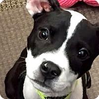 Adopt A Pet :: Prince - Durham, NC