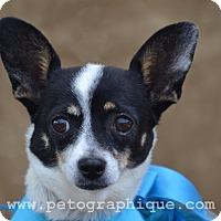 Adopt A Pet :: Allie - Las Vegas, NV