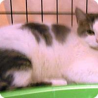 Adopt A Pet :: Robin - Parkton, NC