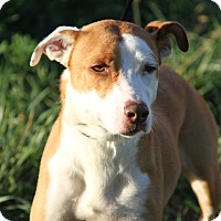 Adopt A Pet :: Josie (Spayed) - Photos 10-18) - Marietta, OH