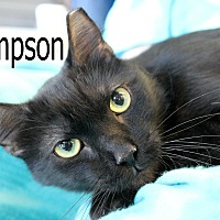 Adopt A Pet :: Sampson - Wichita Falls, TX