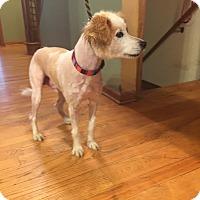 Adopt A Pet :: Mars - Richfield, WI