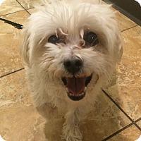 Adopt A Pet :: Guy - Oak Ridge, NJ
