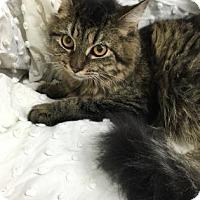 Adopt A Pet :: Lena - Paducah, KY