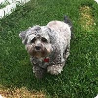 Adopt A Pet :: Rosie - Janesville, WI
