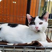 Adopt A Pet :: Aaron - Elyria, OH