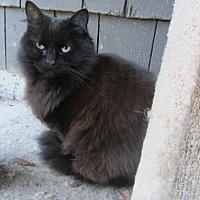 Adopt A Pet :: Mardi - Kingston, WA