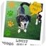 Photo 1 - Dachshund Mix Dog for adoption in Elyria, Ohio - Lucky