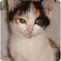 Adopt A Pet :: Gabrielle - Arlington, VA