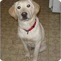 Adopt A Pet :: Landon - Chandler, IN