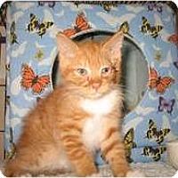 Adopt A Pet :: Andrew - Shelton, WA