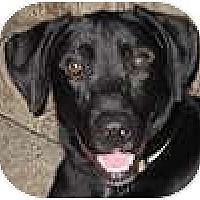 Adopt A Pet :: Benny - Hamilton, ON