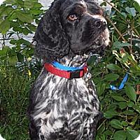 Adopt A Pet :: Monty - Sugarland, TX