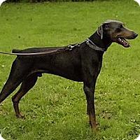 Adopt A Pet :: Preston - killeen, TX