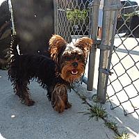 Adopt A Pet :: Romeo - West Deptford, NJ
