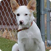 Adopt A Pet :: Vegas - Meridian, ID