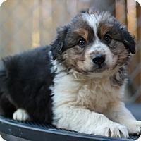Adopt A Pet :: Aaron - Hamilton, ON