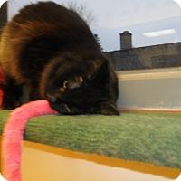 Adopt A Pet :: Rosa - Milwaukee, WI