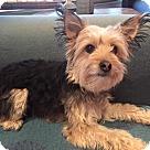Adopt A Pet :: Rowdy