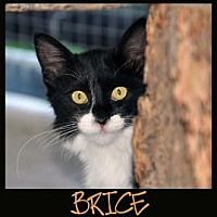 Adopt A Pet :: BRICE - Alamogordo, NM