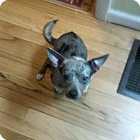 Adopt A Pet :: Merlin - Delaware, OH