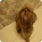 Adopt A Pet :: *JAREN