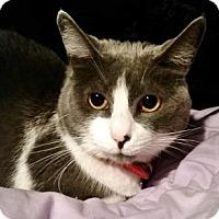 Adopt A Pet :: Nyah - Davis, CA