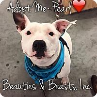Adopt A Pet :: Pearl - Wichita, KS